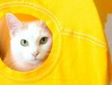 #DIY Como fazer uma casinha para o seu pet