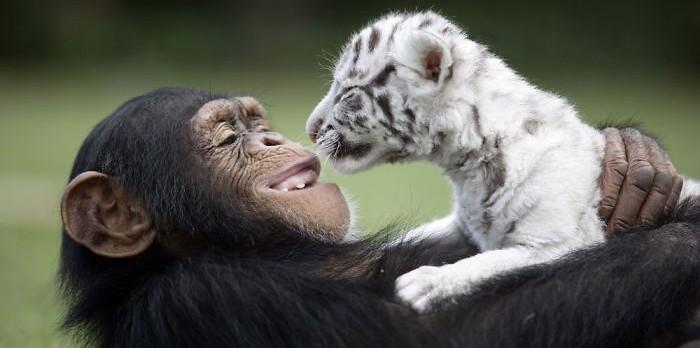 Amizade, diferenças e muito amor