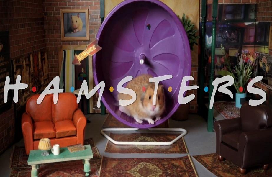 """Fofura: Hamsters são as estrelas em releitura de """"Friends"""""""
