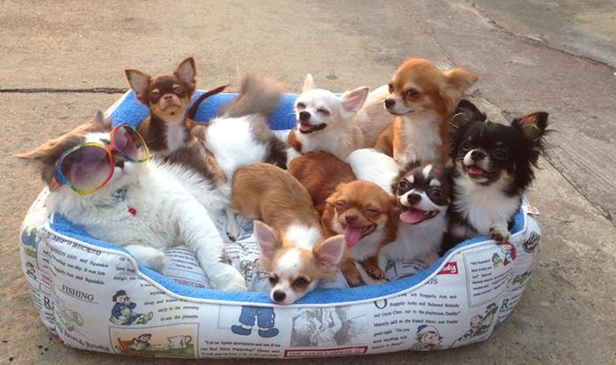 O gatinho Ricchi é o melhor pai do mundo... para 7 cachorrinhos!