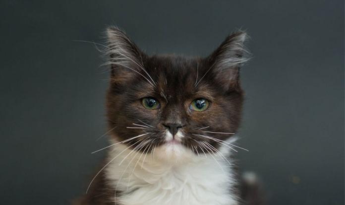 Fotógrafa faz ensaio para adoção de gatinhos