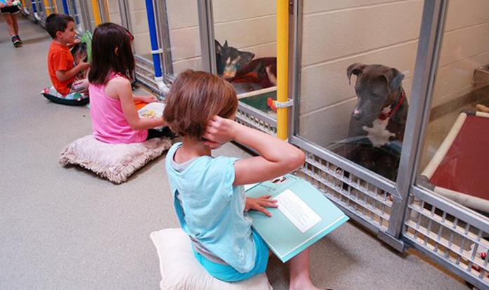 Para ajudar cães que sofreram maus tratos, crianças leem pra eles.