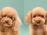 FOFURAAA! O antes e depois de cachorros que ganharam um novo visual!