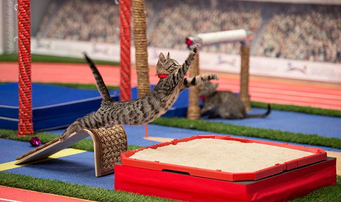 Olimpíada de gatinhos é a competição esportiva mais fofa já inventada!