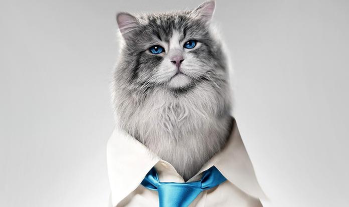 Vem ver o trailer do filme Virei Um Gato!