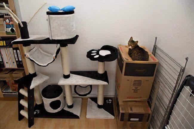 gatos-estranhos_11