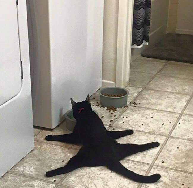 gatos-estranhos_13
