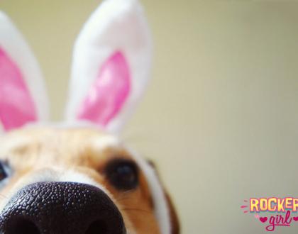 Deixe sua sexta-feira mais feliz com esses cachorrinhos em clima de Páscoa!
