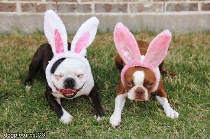 The_Bunny_Ears