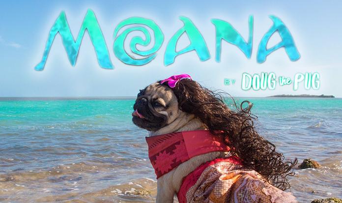Você vai morrer de fofura com Doug The Pug como Moana!