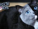 Conheça Narnia, a gata de duas caras mais fofinha do mundo