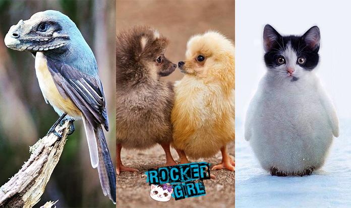 A arte de Sara DeRemer e os animais fantásticos